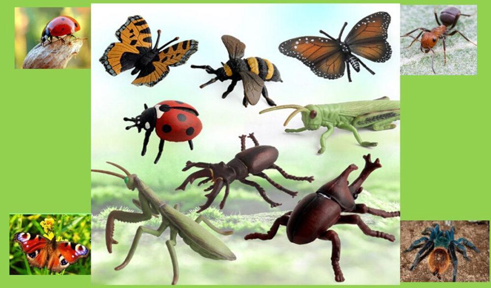 Знакомые – незнакомые насекомые
