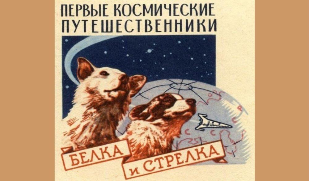 Белка и Стрелка - звёздные собаки!