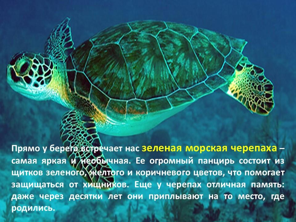 Путешествие в подводный мир