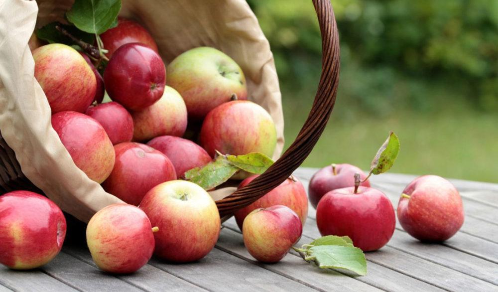 Информационный час «Светлый праздник яблочный»